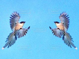 空中を飛んでいる鳥の写真・画像素材[2171097]