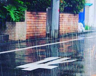 rain lordの写真・画像素材[2171117]