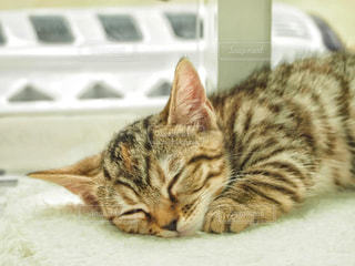 横たわる猫の写真・画像素材[2271302]