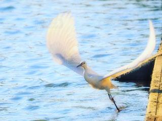 水域の上を飛ぶ鳥の写真・画像素材[2271303]