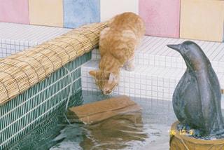 子猫 - No.753037