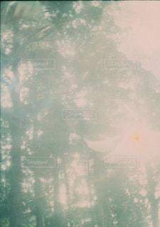 木々の写真・画像素材[2957464]