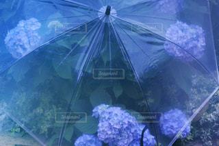 紫陽花すきの写真・画像素材[2166669]