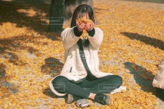 黄色の絨毯の写真・画像素材[3745838]