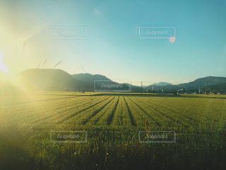 空,夕方,鮮やか,光,田んぼ,米,フィルム,田園風景,フィルム写真,フィルムフォト,懐かしい景色