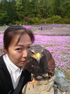 ハリスホークと芝桜の写真・画像素材[2092915]