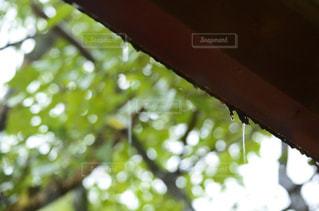 空,建物,木,雨,緑,水滴,家,屋根,梅雨,雨の日,雨の日フォト