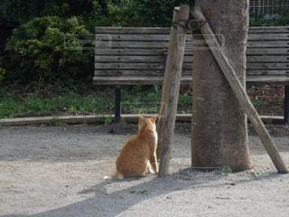 猫,公園,後ろ姿,背中,恥ずかしがり屋