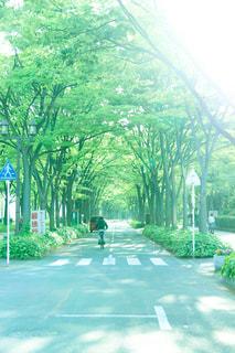 風景,屋外,綺麗,散歩,景色,涼しい,並木道,落ち着く,日中,好きな場所,良い場所