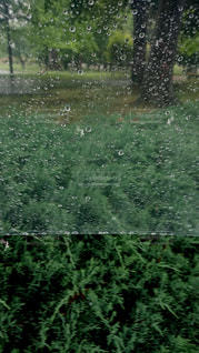 雨,傘,屋外,水,水滴,雫,ビニール傘,雨の日