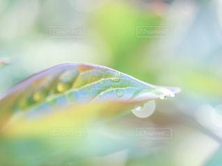 雨上がりの葉の写真・画像素材[2107434]