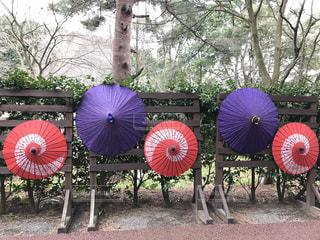 赤と紫の唐傘の写真・画像素材[2186078]