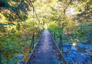 須戸渓谷の吊り橋の写真・画像素材[2219280]