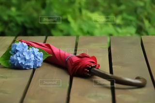 赤い傘と紫陽花の写真・画像素材[2239991]