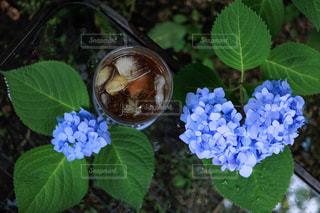 ハートの紫陽花の写真・画像素材[2264106]