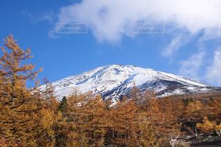 富士山と紅葉の写真・画像素材[2424914]