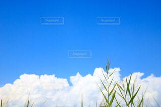 入道雲とススキの写真・画像素材[2429285]