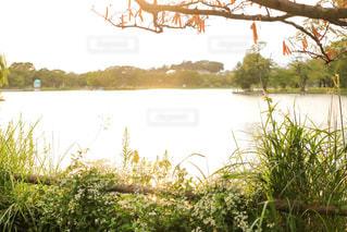 公園,屋外,夕方,レトロ,ナチュラル,フィルム,雰囲気,カラー,自然光,フィルム写真,静岡県,フィルムフォト,フィルム風写真,夕陽に照らされる,夕日に照らされる
