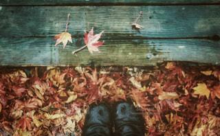 雨の日の落ち葉の写真・画像素材[2447423]