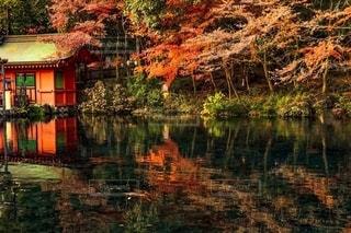 湧玉池の紅葉の写真・画像素材[2608228]