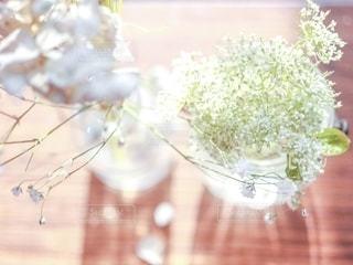 レースフラワーと花瓶の光の写真・画像素材[2633408]