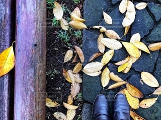 公園の落ち葉とブーツの写真・画像素材[2702353]