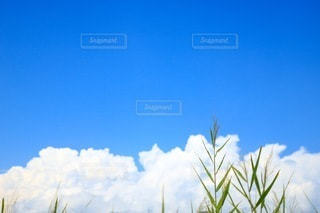 夏空の写真・画像素材[3356838]