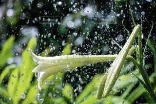 ホースで水あげの写真・画像素材[3484835]