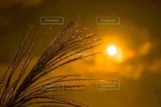 十五夜の月とススキの写真・画像素材[3718750]
