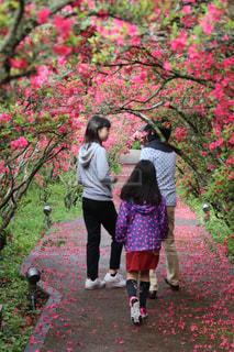 女性,家族,風景,花,春,少女,人物,後姿,トンネル,草木,つつじ