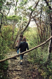 風景,森,山,女の子,山道,人物,後姿,ハイキング