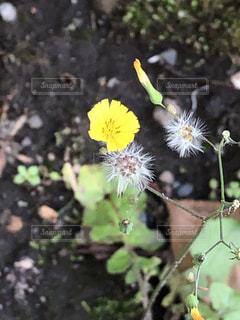 花の写真・画像素材[2148410]