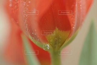 花のクローズアップの写真・画像素材[2113533]