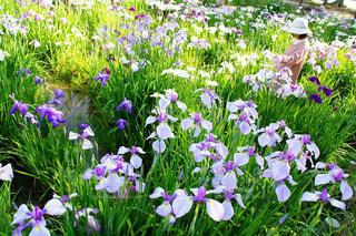 自然,雨上がり,梅雨,6月,はな,梅雨入り,花しょうぶ