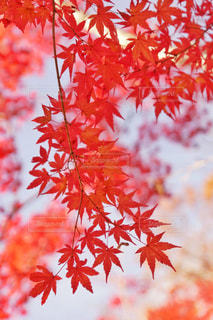 秋の写真・画像素材[2400697]