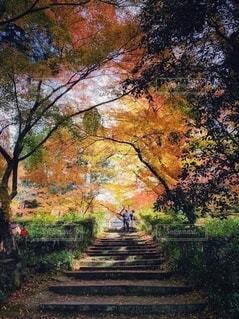 木の前のベンチの写真・画像素材[2782758]