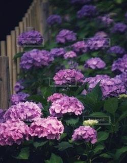 花のクローズアップの写真・画像素材[3376407]