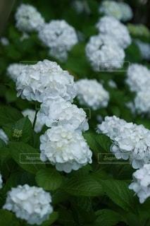花のクローズアップの写真・画像素材[3376436]