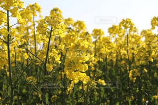花のクローズアップの写真・画像素材[2124826]