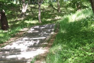 弘前公園の幻想的な石段風景の写真・画像素材[2151718]