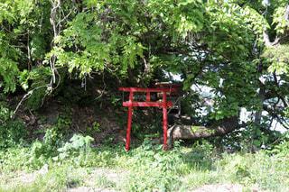 新緑と赤い鳥居がある観光地の写真・画像素材[2210863]