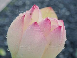 近くの花のアップの写真・画像素材[1434210]