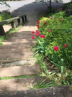 ハーブ&ローズガーデンの階段の写真・画像素材[2147354]