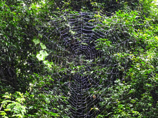 キラキラ蜘蛛の巣の写真・画像素材[2213024]
