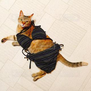 ネコと水着の写真・画像素材[2142513]