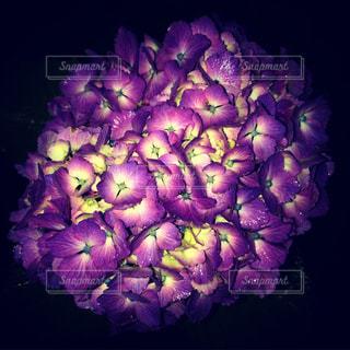 夜,雨,あじさい,紫陽花,梅雨,雨の日