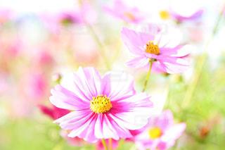 花のクローズアップの写真・画像素材[2122438]