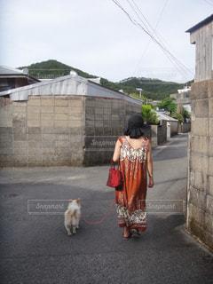犬,南国,後ろ姿,帽子,散歩,田舎道