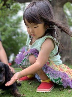女の子と犬の写真・画像素材[2287796]
