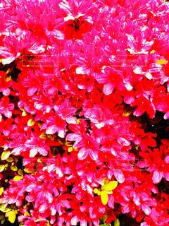 花のクローズアップの写真・画像素材[2129668]
